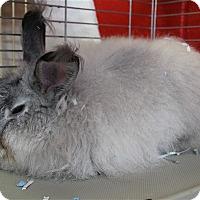 Adopt A Pet :: Pete - Elyria, OH