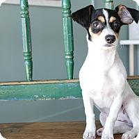 Adopt A Pet :: Cherry - San Antonio, TX
