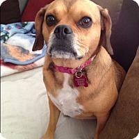 Adopt A Pet :: Lila - Edmonton, AB