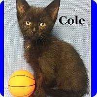 Adopt A Pet :: Cole - Cuba, MO