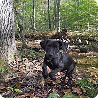 Adopt A Pet :: Iverson - New Oxford, PA