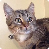Adopt A Pet :: Ariel - Brimfield, MA