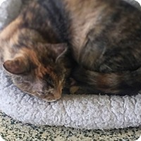 Adopt A Pet :: Chelsea - Indianapolis, IN