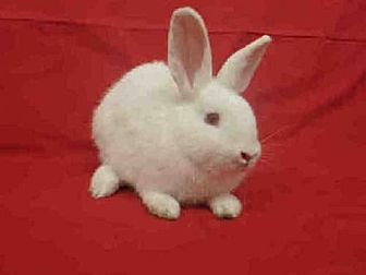 Other/Unknown for adoption in Los Angeles, California - SCOTTY
