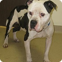 Adopt A Pet :: King - Gary, IN