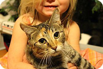 Calico Cat for adoption in McDonough, Georgia - Padme