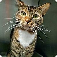 Adopt A Pet :: MuiMui & Minuet - West Palm Beach, FL