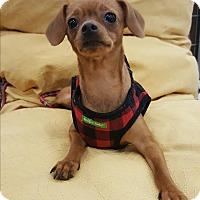 Adopt A Pet :: Noel - Monrovia, CA