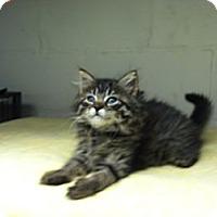 Adopt A Pet :: Angel - Island Park, NY