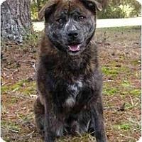 Adopt A Pet :: Yogi-See my video! - Mocksville, NC