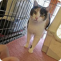 Adopt A Pet :: Majesta - Acme, PA