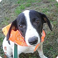 Adopt A Pet :: Millie - Stilwell, OK
