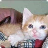 Adopt A Pet :: George - Reston, VA