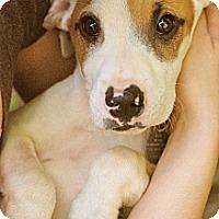Adopt A Pet :: Calvin - Homewood, AL