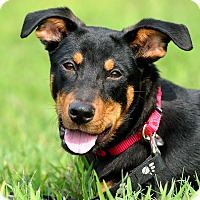 Adopt A Pet :: Denver - Dacula, GA