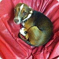 Adopt A Pet :: *URGENT* DIEGO - Van Nuys, CA