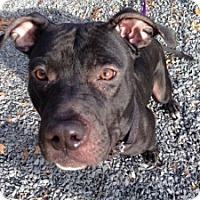 Adopt A Pet :: Mel - Medford, MA