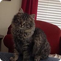 Adopt A Pet :: CP - NC - Fluffy - Blairstown, NJ