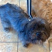 Adopt A Pet :: Orion - Oak Ridge, NJ