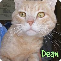 Adopt A Pet :: Dean - Menomonie, WI