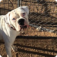 Adopt A Pet :: Czar - Reno, NV
