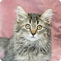 Adopt A Pet :: Maddie - Fountain Hills, AZ