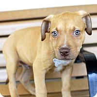 Adopt A Pet :: Leo-Adopted! - Detroit, MI