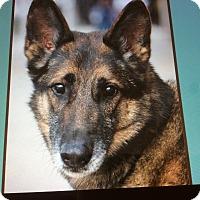 Adopt A Pet :: ROCKET VON RIESSA - Los Angeles, CA