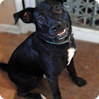 Adopt A Pet :: Layla - Syracuse, IN