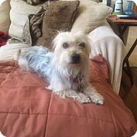 Adopt A Pet :: BENJI - Oakland, CA
