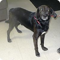 Adopt A Pet :: Eli - Eastpoint, FL