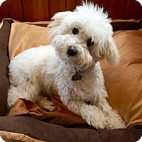Adopt A Pet :: Blake Puppy - Encino, CA