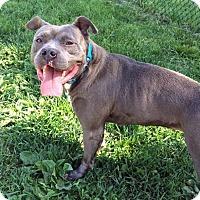 Adopt A Pet :: Nala - Troy, MI