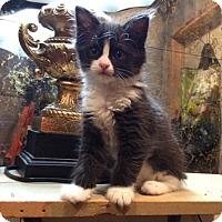 Adopt A Pet :: Gideon - Los Angeles, CA