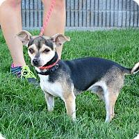 Adopt A Pet :: Argus - Meridian, ID