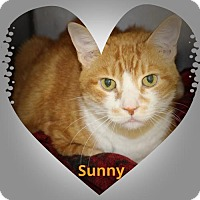Adopt A Pet :: Sunny - Royal Palm Beach, FL