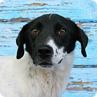 Adopt A Pet :: WILLY - LAFAYETTE, LA