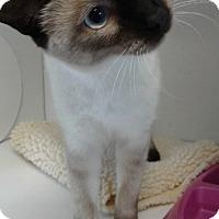 Adopt A Pet :: Isabella - Lake Charles, LA