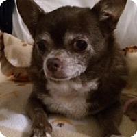 Adopt A Pet :: Mocha - Satellite Beach, FL