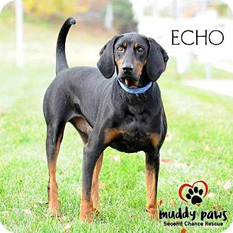 Black and Tan Coonhound Mix Dog for adoption in Council Bluffs, Iowa - Echo