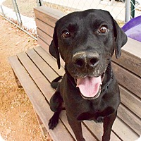 Adopt A Pet :: Ike - Meridian, ID