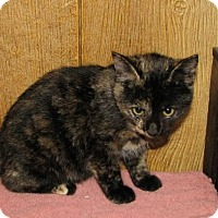 Adopt A Pet :: Ushma (baby girl) - Harrisburg, PA