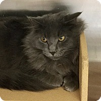 Adopt A Pet :: Earl Grey-Adoption Pending! - Colmar, PA