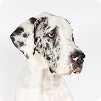 Adopt A Pet :: Bram - St. Louis Park, MN