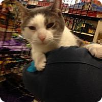 Adopt A Pet :: Bixlee - Toledo, OH
