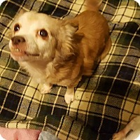 Adopt A Pet :: Beverly - Bernardston, MA