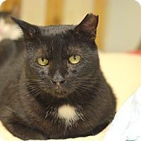 Adopt A Pet :: Bev - Queens, NY