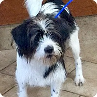 Adopt A Pet :: I'M ADOPTED Checkers - Oswego, IL