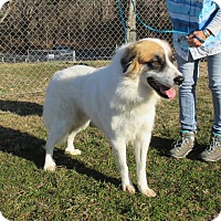 Adopt A Pet :: Beethoven - Reeds Spring, MO