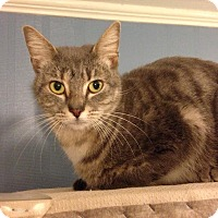 Adopt A Pet :: A..  Hollie - Mooresville, NC